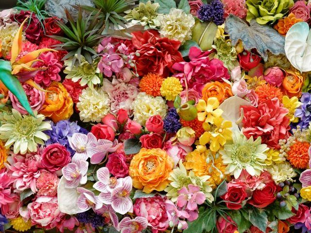「世界に一つだけの花」の画像検索結果