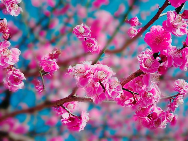 毎年変わる春分の日。その決め方...
