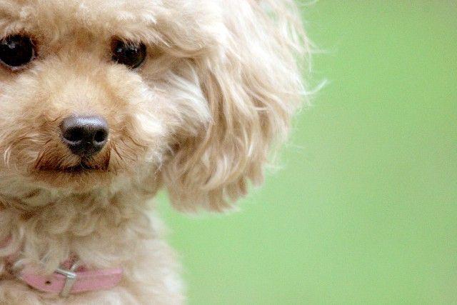 キムタク 犬 犬種